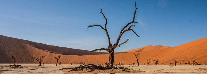 web_deadvlei